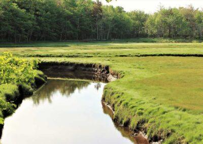 Creek in The Marsh